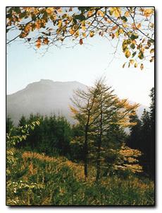 Ferienwohnungen Bernrieder, Herbst